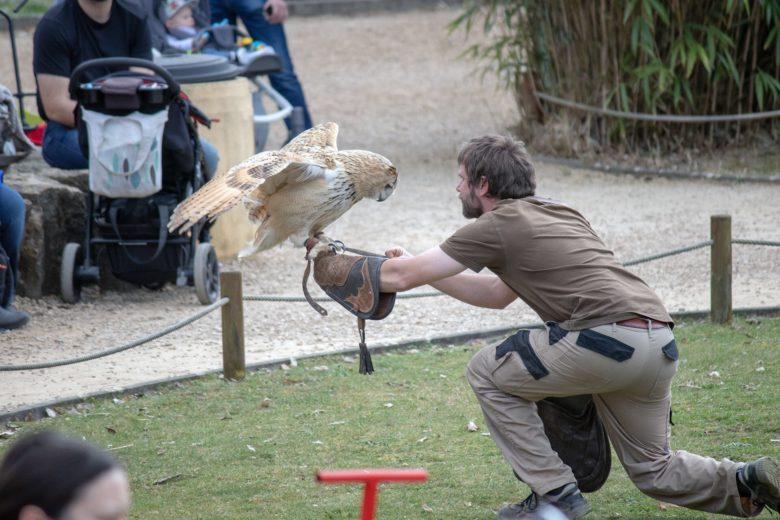Eule im Neunkircher Zoo